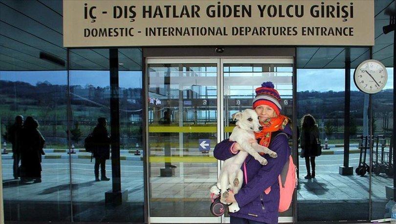 Sokak köpeği 'Pamuk'un hayatı 'Heidi' ile değişti