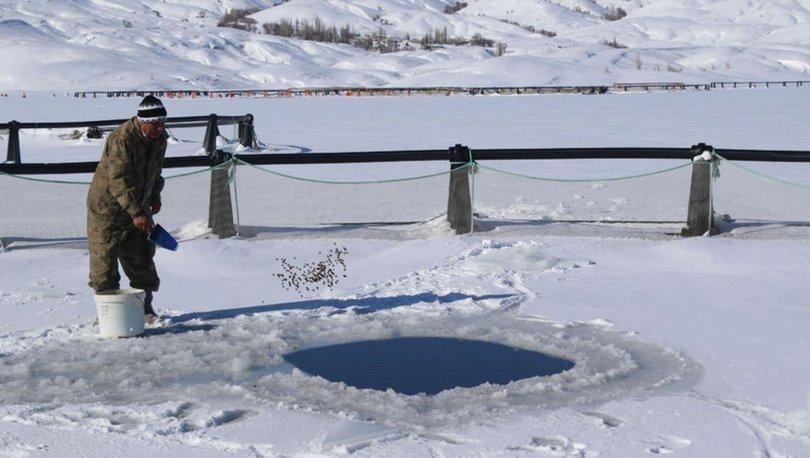 Buzları kırarak balıkları besliyorlar