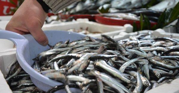 Balık piyasası durgun