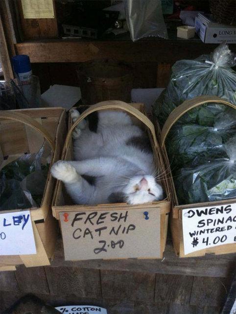 Her yerde uyuma yetenekleriyle kıskandıran sevimli kediler
