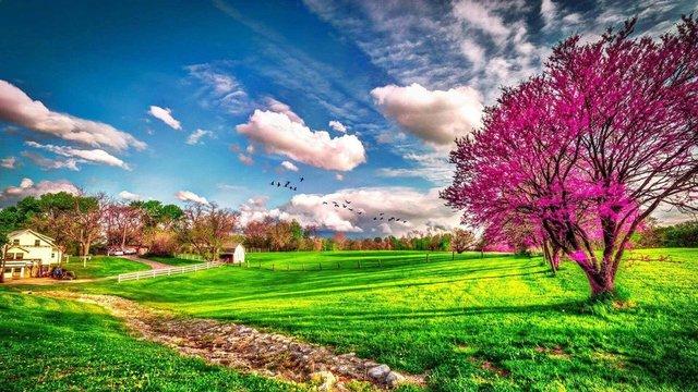 İlkbahar Ekinoksu geldi! İlkbahar başlangıcı ne zaman başlayıp, bitecek? Google'dan resimli jest...