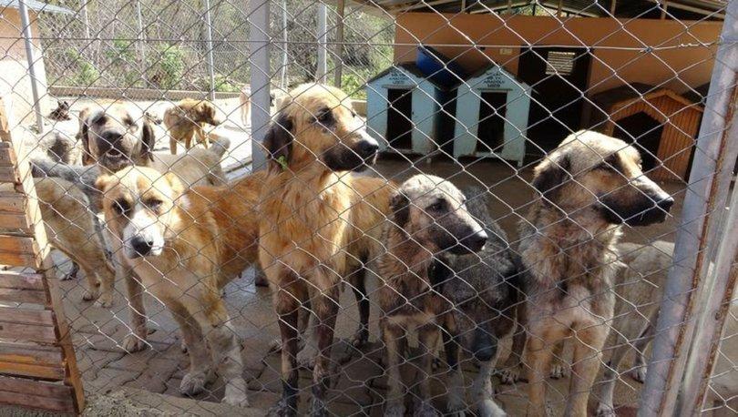 Adana'nın Kozan ilçesinde barınakta bulunan köpekler açlıktan birbirine yemeye başladı!