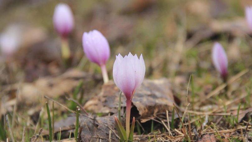 Göz alıcı Munzur Vadisi bahar çiçekleriyle süslendi