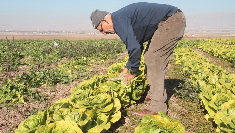Ziraat mühendislerinden 65 yaş üstü çiftçilere ekim dikim için