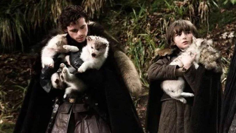 Game Of Thrones'ta Bran Stark'ın köpeği Summer kansere yenik düştü