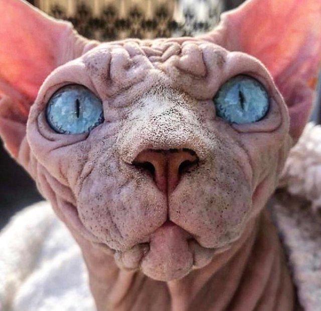 Dünyanın en korkutucu kedisi olabilir!