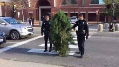 Ağaç kılığına girerek yasağı hiçe saydı