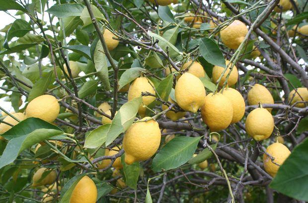 Martta fiyatı en fazla artan ürünün limon