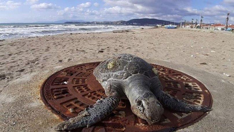 aydın kaplumbağa ölümleri