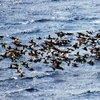 Turistler değil ördekler akın etti