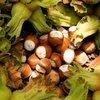 Fındık ve mamulleri ihracatı martta arttı