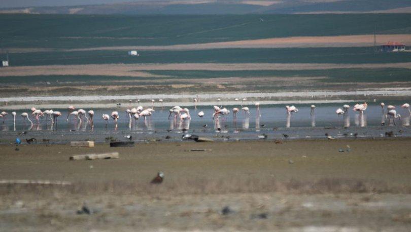 180 kuş türüne ev sahipliği yapan 'Düden Gölü' kurumaya yüz tuttu - Haber