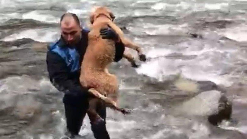 Tehlikeye aldırış etmeyen zabıta memuru derede mahsur kalan köpeği kurtardı