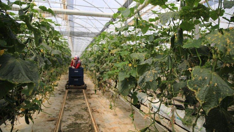 Çiftçilerin üretim mesaisi