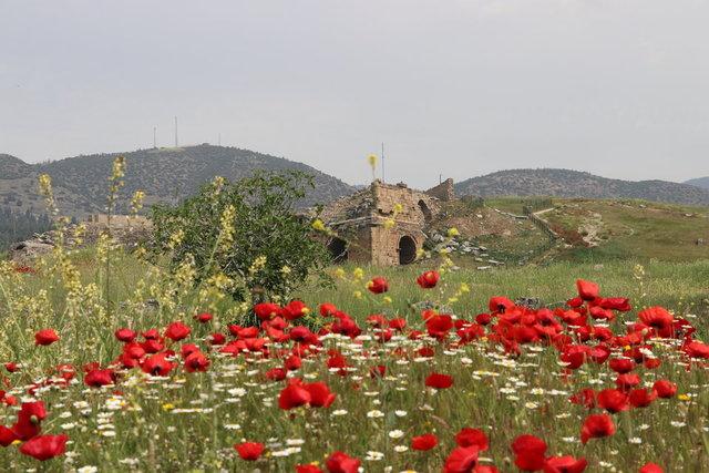 Hiyerapolis Antik Kenti gelincik çiçekleriyle bezendi