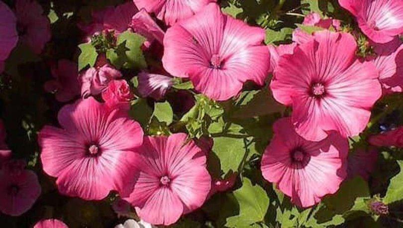 Kuşadası'nın özel çiçekleri açtı