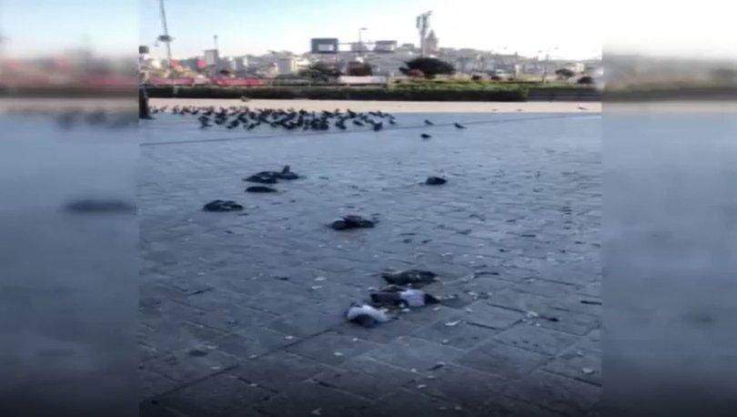 Fatih'te güvercinleri ezen cani gözaltına alındı