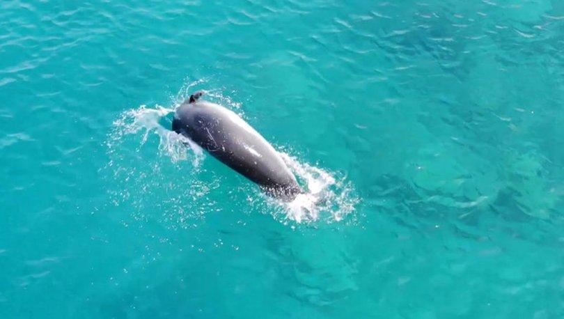 Drone ile tesadüfen Akdeniz foku görüntüledi...