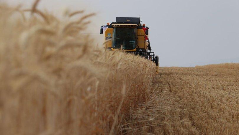 Mısır, soya ve buğdayda ekim alanları arttı, pamukta azaldı