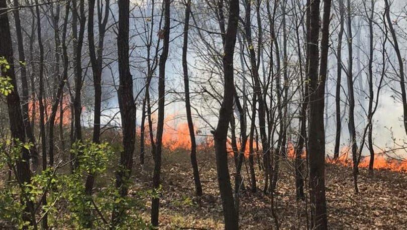 Son dakika haberler... Tekirdağ'da orman yangını!