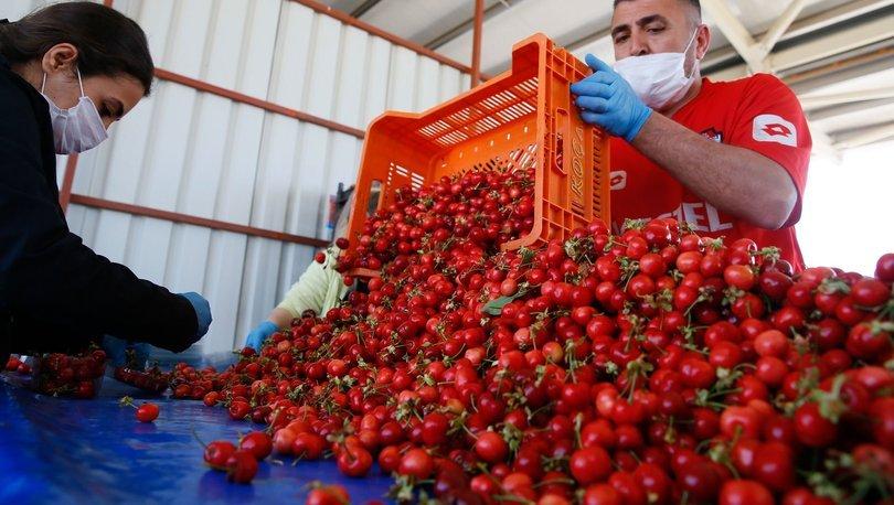 Kiraz ihracatçıları yeni sezondan umutlu
