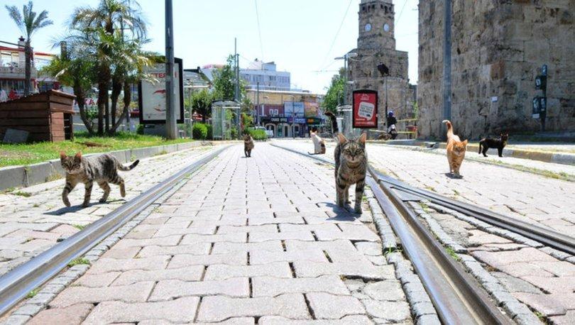 Kedilerin sosyal mesafe kuralı