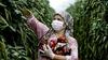 Koronavirüsün Türkiye'de istihdama etkisi ne olacak?