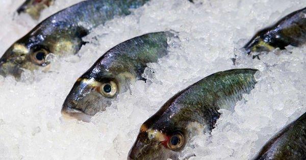 Gıda işletmelerine dondurulmuş balık uyarısı