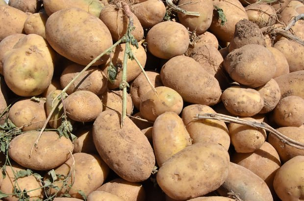 Patates ithalatına gözetim