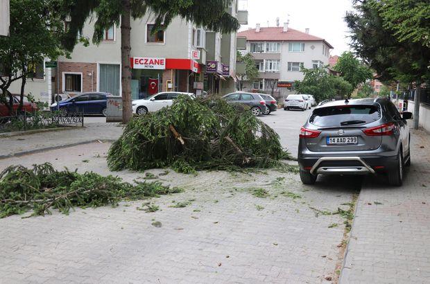 Bolu'da şiddetli rüzgar ağaçları devirdi!
