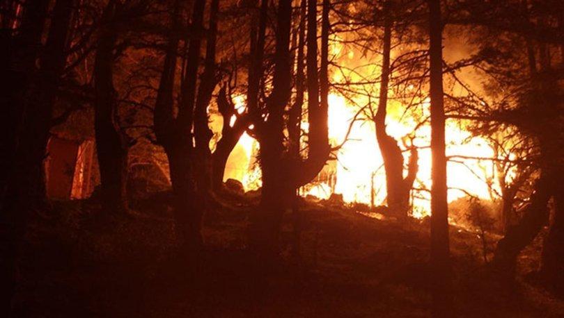 orman yangını