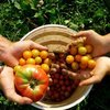 Bitkisel üretimin artacağı tahmin edildi