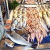Balık ve deniz ürünleri ithalatına kayıt düzenlemesi