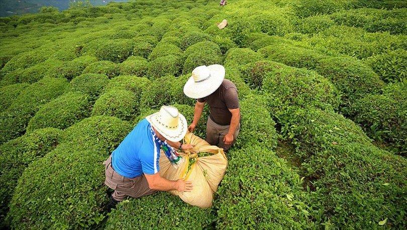 Rize'den yapılan 4 aylık çay ihracatı