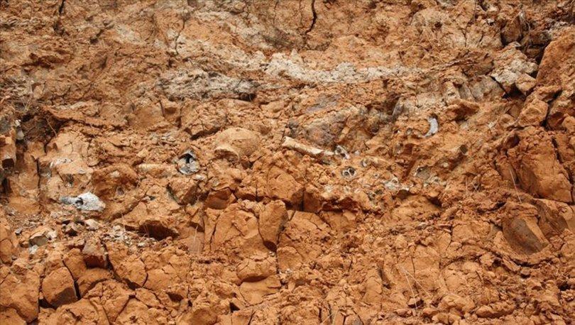 45 milyon yıllık fosil