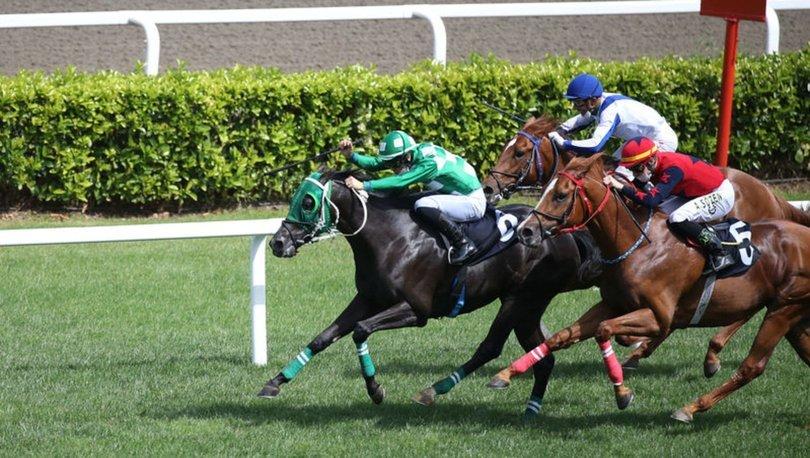 At yarışları
