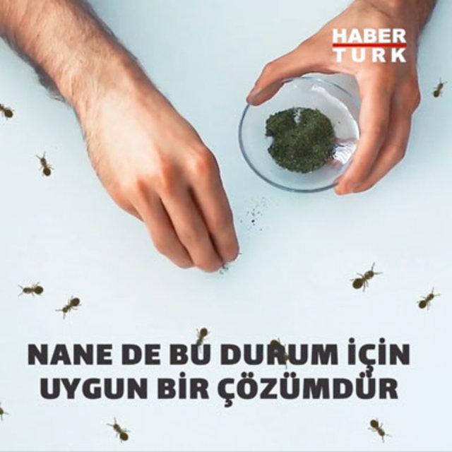 Karıncalara zarar vermeden kurtulmanın doğal yolları...