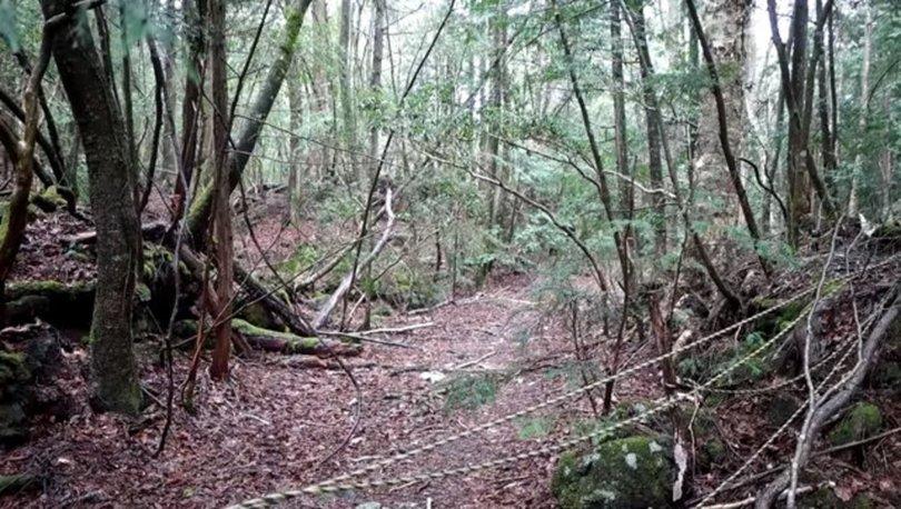 Japonya´daki intihar ormanında intihar vakası!
