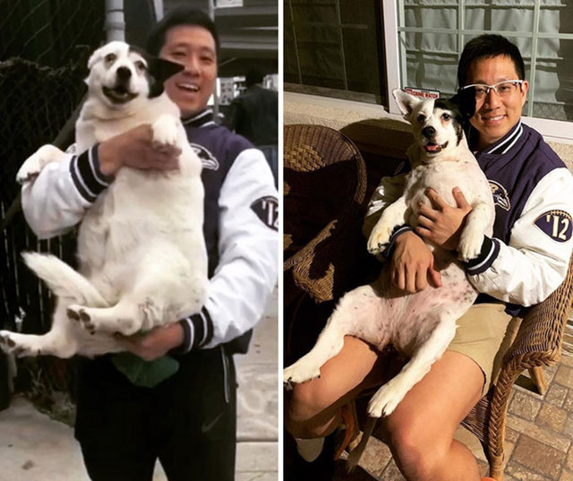 Obeziteye yakalanan köpeklerin son halleri inanılmaz