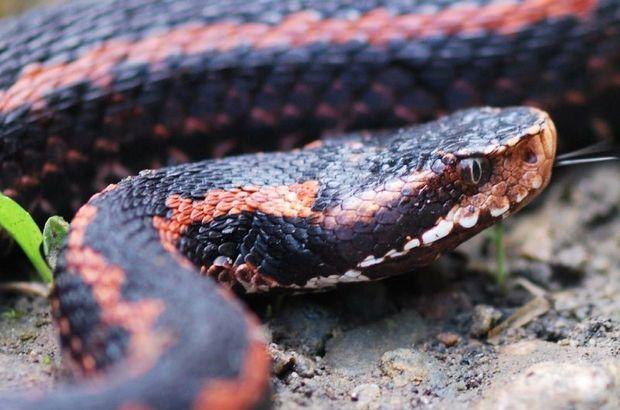 İşte yılanları öldürmenin ağır bedeli!