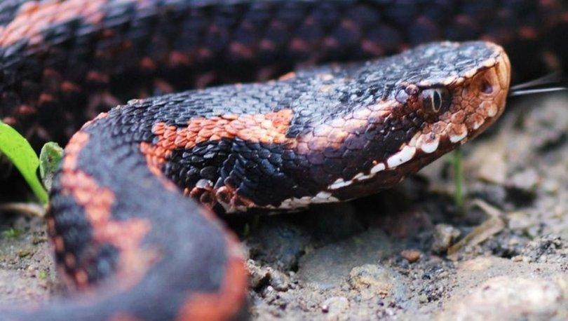 yılanları öldürürseniz ne olur?