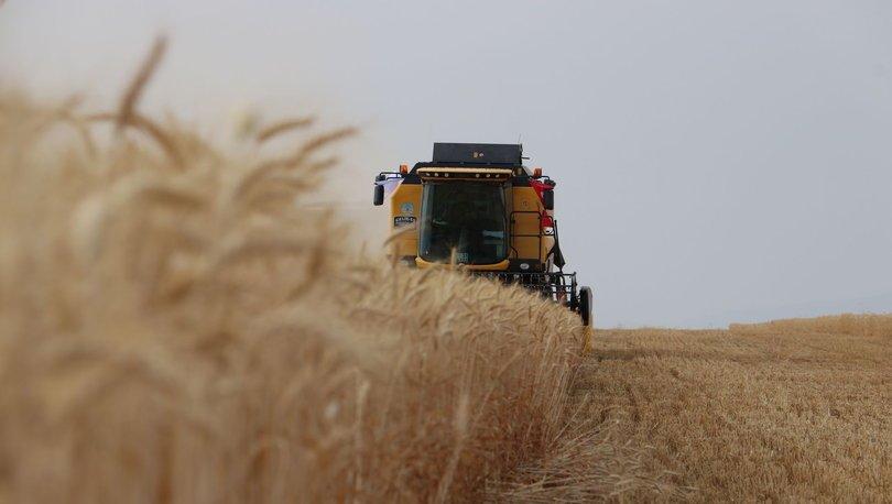 Buğday 2020 rekolte