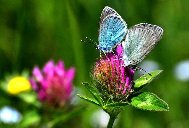 Kırmızı ve mavi kelebekler belgeselleri aratmıyor