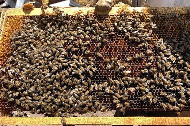 Bakımını yaptığı arılar sonu oldu