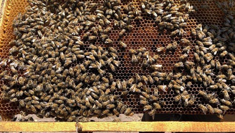 Batman'da bakımını yaptığı arılar sonu oldu