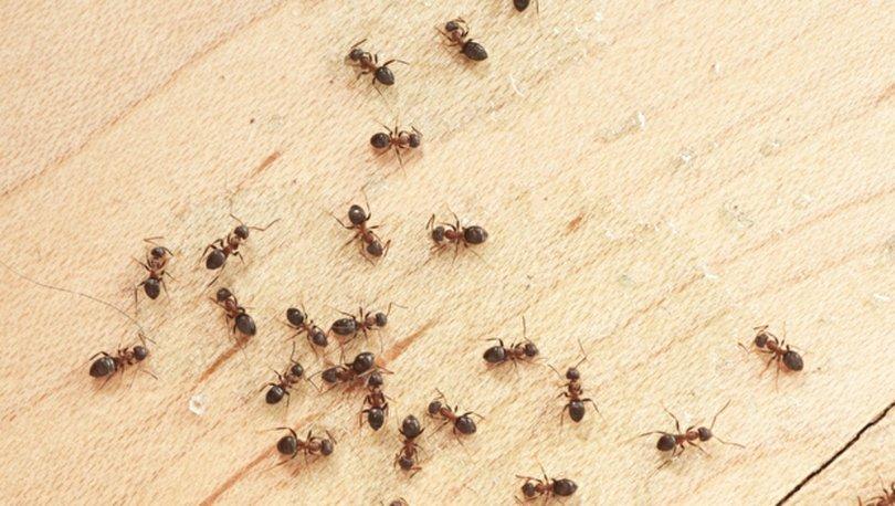 Evde doğal yolla karıncadan kurtulma yöntemleri nelerdir?