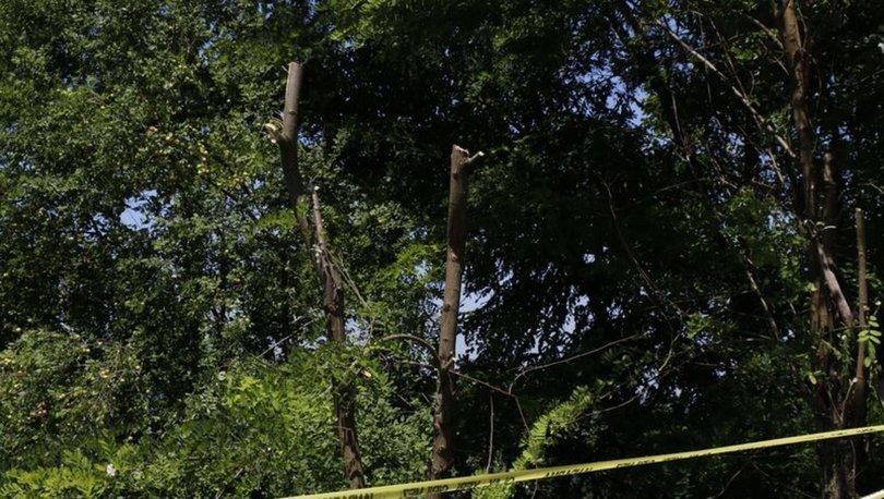 zonguldak'ta dut budama tartışmasında cinayet