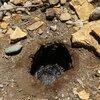 Adana'da esrarengiz kuyu... Çevresindeki canlılar ölüyor