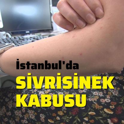 İstanbul'da sivrisinek kabusu