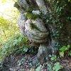 Gören şaşkınlık yaşadı! Sanki ağacı koruyor...
